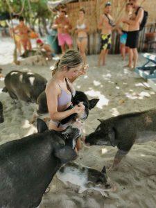 Gojo Pig Island Koh Samui